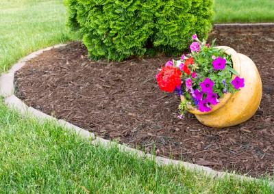 4 inch Geranium for the Garden Whatcom County 07