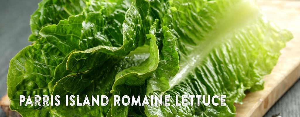Parris Island Romaine Lettuce Starts Bellingham Washington