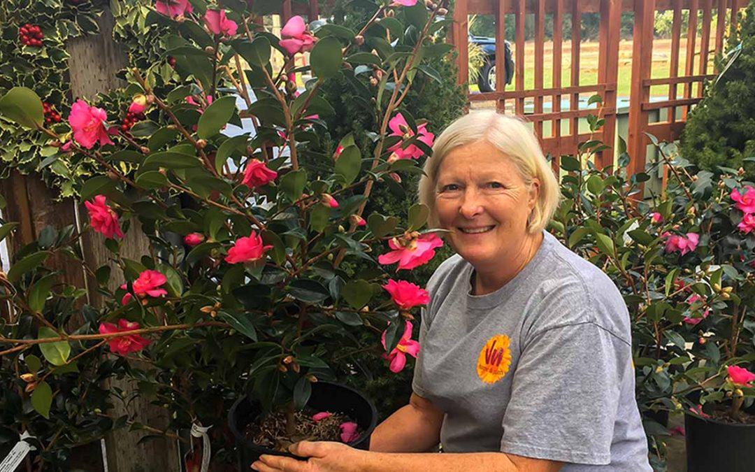 Sasanqua camellias – Now in at the Garden Center!