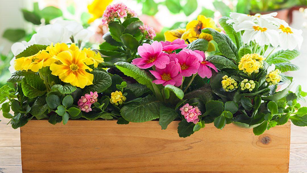 Indoor Container Gardening Class